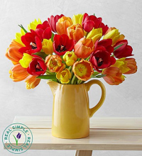 Autumn Tulips in Pitcher