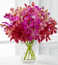 Tickled Pink Orchid Bouquet - 10 Stems