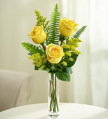Love\'s Embrace Roses – Yellow